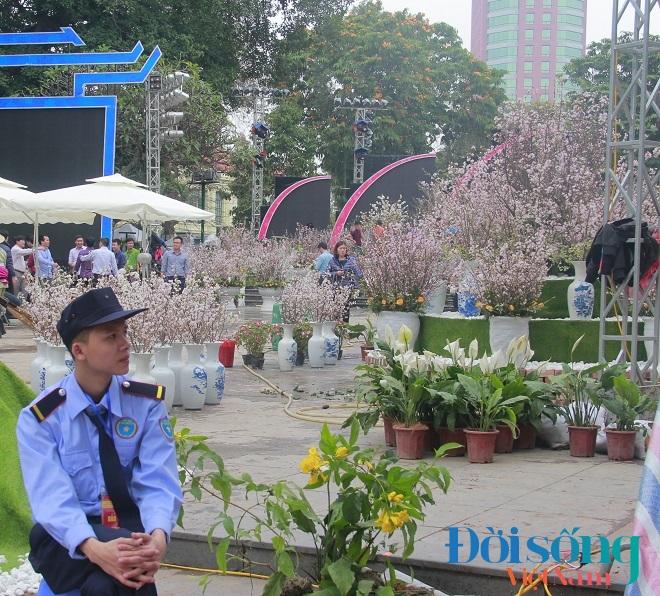 Lễ hội hoa anh đào Hà Nội 7