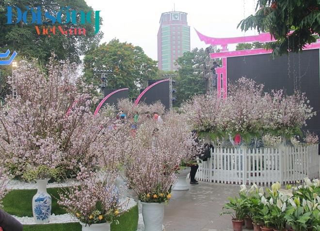 Lễ hội hoa anh đào Hà Nội 6