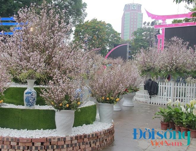 Lễ hội hoa anh đào Hà Nội 8