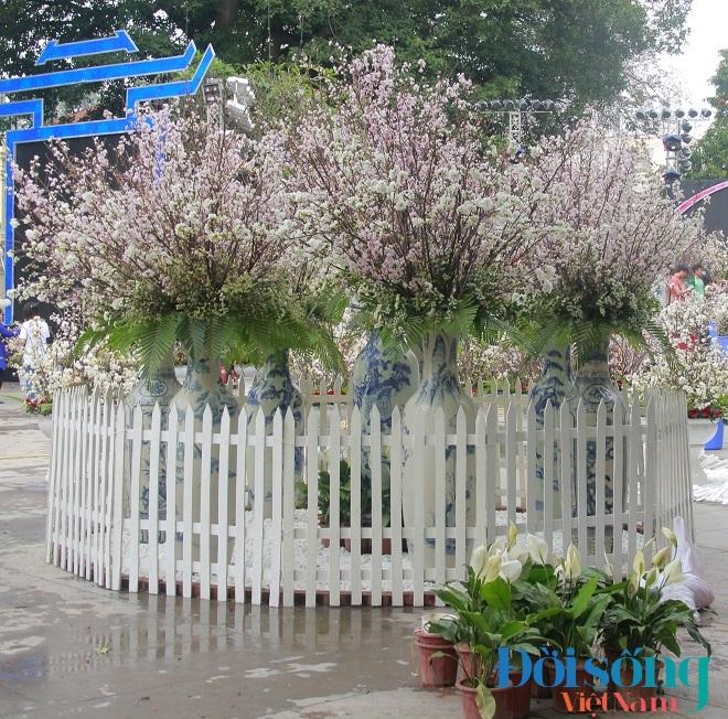 Lễ hội hoa anh đào Hà Nội 9