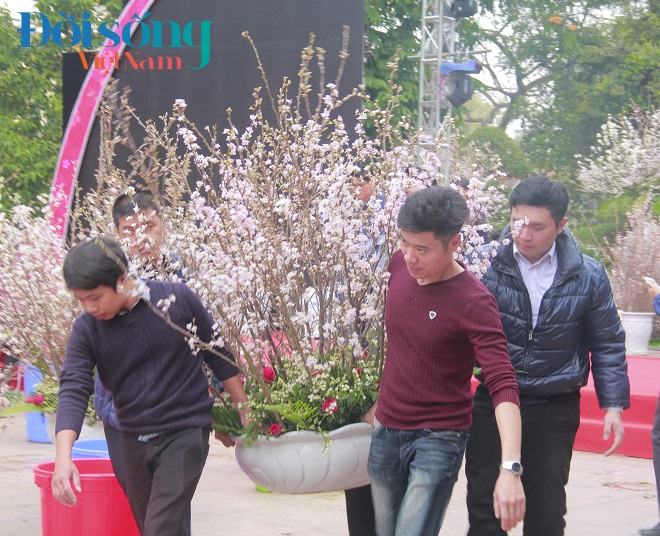 Lễ hội hoa anh đào Hà Nội 10