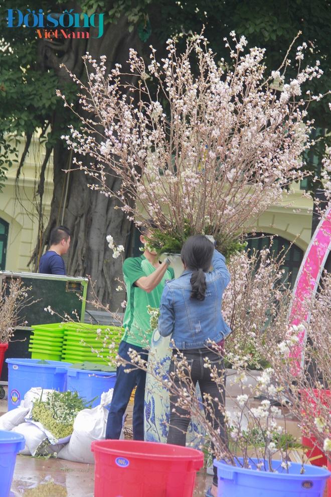 Lễ hội hoa anh đào Hà Nội 11