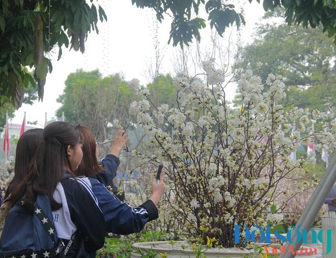 Lễ hội hoa anh đào Hà Nội 16