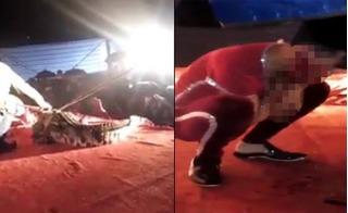 Vụ nghệ sĩ bị cá sấu cắn: Phát hiện nhiều sai phạm của đoàn xiếc