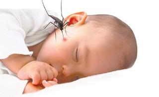 10 mẹo dân gian làm giảm ngứa và sưng tấy do muỗi đốt cho bé cực hiệu quả