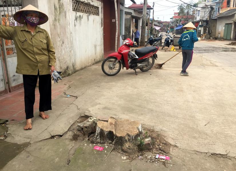 Chặt cây xanh vỉa hè Hà Nội 4