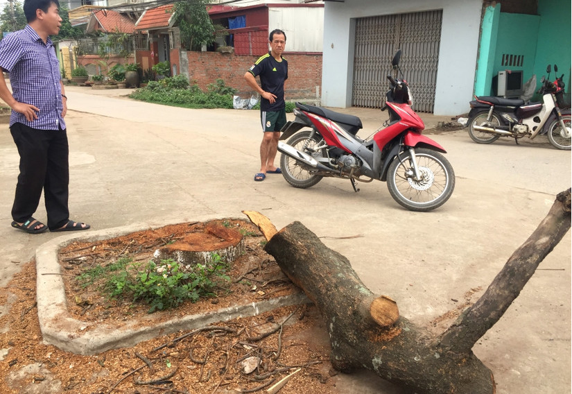 Chặt cây xanh vỉa hè Hà Nội 7