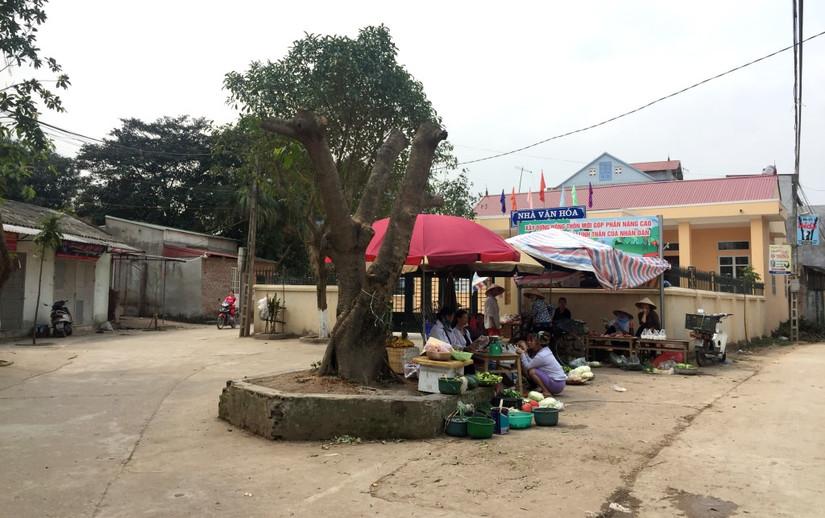 Chặt cây xanh vỉa hè Hà Nội 11