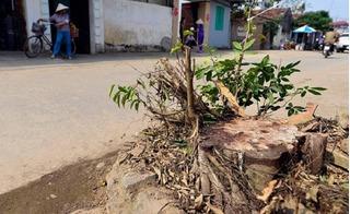 Vụ chặt cây dọn dẹp vỉa hè: Cán bộ xã làm rập khuôn, máy móc... kế hoạch của huyện