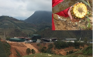 Hé lộ nguyên nhân hàng trăm tấn dứa ở Lào Cai bị thối nhũn