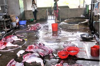 76% thịt lợn ở Việt Nam được giết mổ từ cơ sở nhỏ lẻ kém vệ sinh