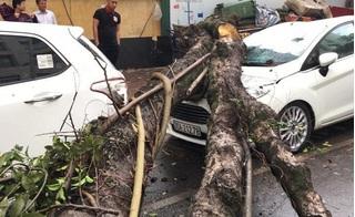 Hà Nội: Mưa giông lớn làm cây đổ đè bẹp ô tô trên phố Phan Huy Chú