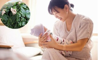 Muốn lợi sữa, mẹ sau sinh nhất định đừng bỏ qua 5 món rau này nhé!