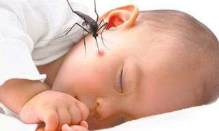 Mẹo nhỏ giúp vết muỗi đốt của bé giảm sưng, hết ngứa ngay lập tức
