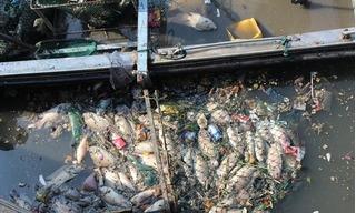 Hàng chục tấn cá lại chết trắng, bốc mùi thối nồng nặc trên kênh Nhiêu Lộc - Thị Nghè