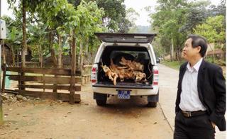 Dùng xe biển xanh chở gỗ lậu, giám đốc trung tâm y tế bị dân ghi hình