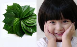Tổng hợp bài thuốc dân gian giúp con nhanh khỏi bệnh, hay ăn  mau lớn