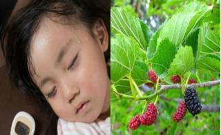Lá dâu tằm: Bài thuốc quý trị chứng mồ hôi trộm, trằn trọc khó ngủ ở trẻ nhỏ