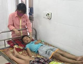 Hơn 50 học sinh nhập viện cấp cứu vì ngộ độc quả cây ngô đồng