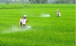 Vì sao Việt Nam nhập thuốc bảo vệ thực vật chủ yếu từ Trung Quốc?