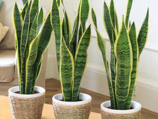 Người mệnh Thủy nên trồng cây gì để hút tài lộc vào nhà?