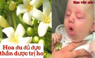 Hóa ra hoa đu đủ trị ho cực hiệu quả ở trẻ em mà bây giờ bạn mới biết