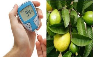 Lá ổi: Bài thuốc quý chặn đứng bệnh tiểu đường cực đơn giản