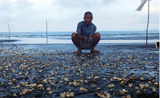 Thủy sản chết trắng vịnh Hà Tiên: Người dân bần thần nhìn tiền của tan theo bọt nước