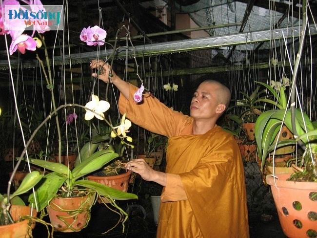 Thiền sư Thích Chơn Hữu trồng lan bán lấy tiền để giúp đỡ người nghèo