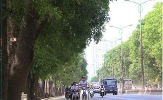 1300 cây xà cừ trên đường Phạm Văn Đồng trước khi bị chặt hạ