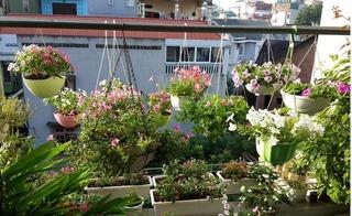 Choáng ngợp trước vườn hoa ban công không kém vườn hoa Nhật Tân của bà mẹ 3 con ở Hà Nội