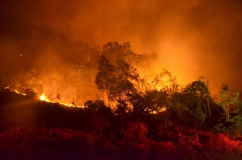 cháy rừng Sóc Sơn 3