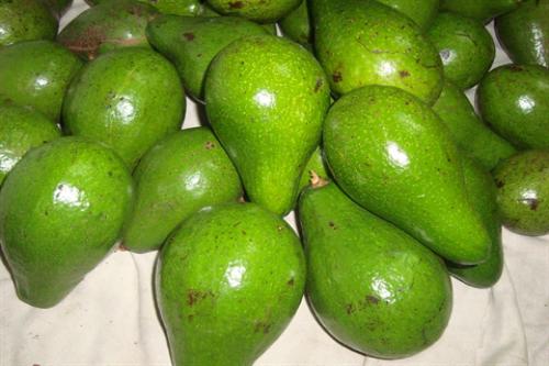 hóa chất kích thích trái cây nhanh chín