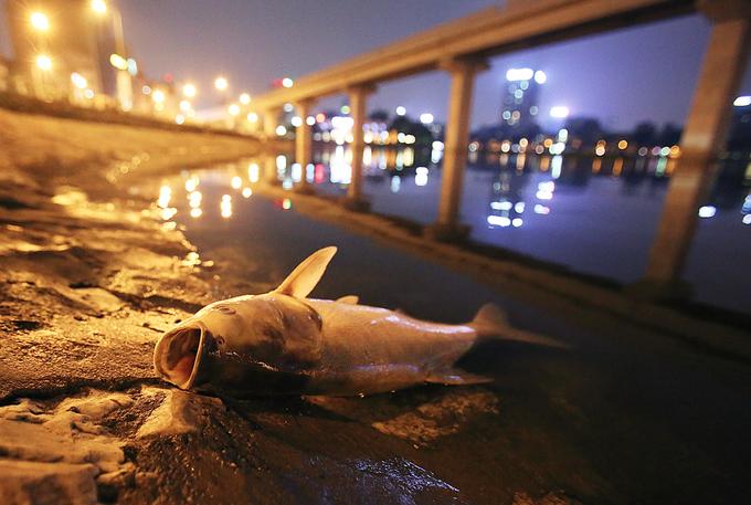 Cá chết bất thường ở hồ Hoàng Cầu