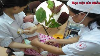 Hạ sốt cho trẻ sơ sinh sau khi tiêm phòng bằng lá tía tô, 99% thành công