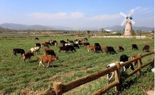 Những bước phát triển bền vững của Vinamilk để trở thành thương hiệu sữa lớn nhất Việt Nam