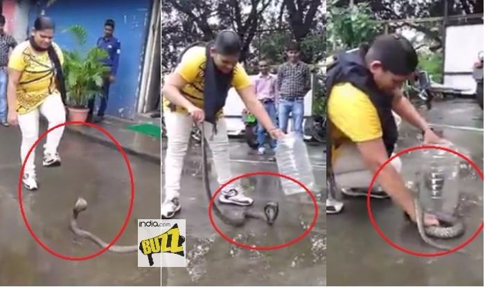 Cô gái Ấn Độ tay không bắt hổ mang chúa. Ảnh: DailyMail
