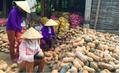 Sau thịt lợn lại sắp có chiến dịch giải cứu bí đỏ ở Lạng Sơn?