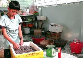 Người dân Nghệ An thu 700.000 đồng mỗi ngày chỉ nhờ bán sim rừng