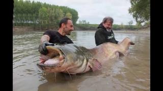 Quá trình săn bắt cá trê khổng lồ nặng 300 kg