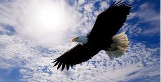 Vì sao đại bàng được mệnh danh là chúa tể bầu trời?