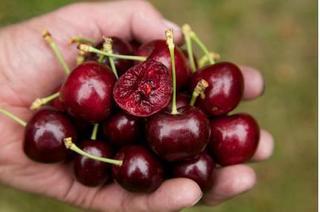 Quả cherry rất tốt nhưng sẽ thành thuốc độc nếu ăn không đúng cách
