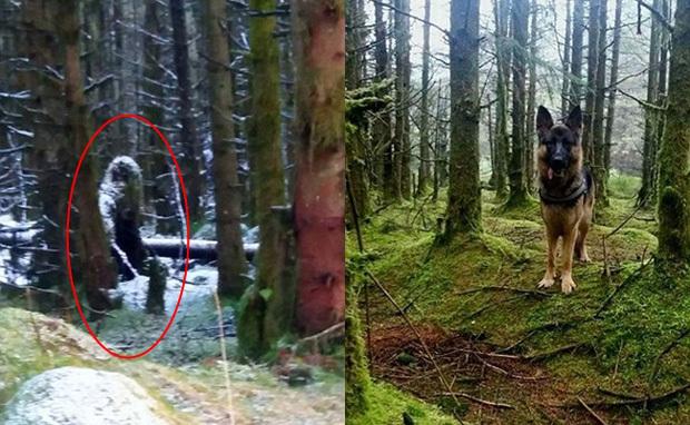 Bigfoot bất ngờ lộ diện và bị người dân chụp lại