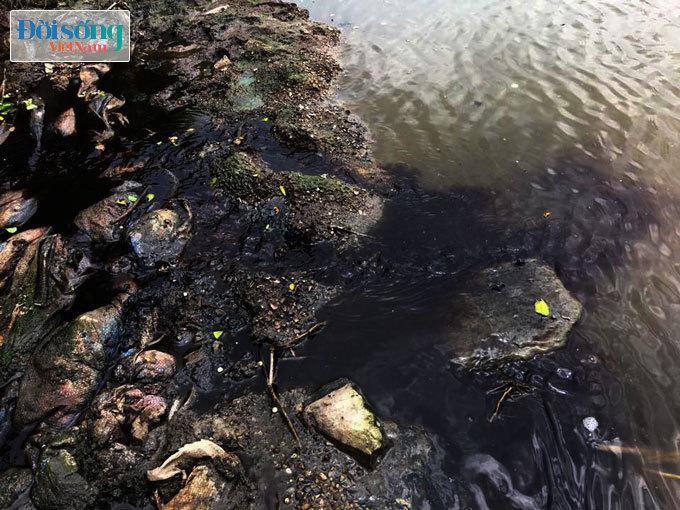 Nước thải xả thẳng xuống ao hồ