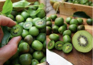 Kiwi tí hon giá hơn 1 triệu/kg đang