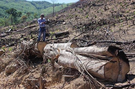 Chặt phá rừng An Lão, Bình Định