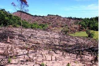 """Vụ rừng An Lão bị """"xóa sổ"""": Chặt phá rừng tự nhiên để trồng keo"""