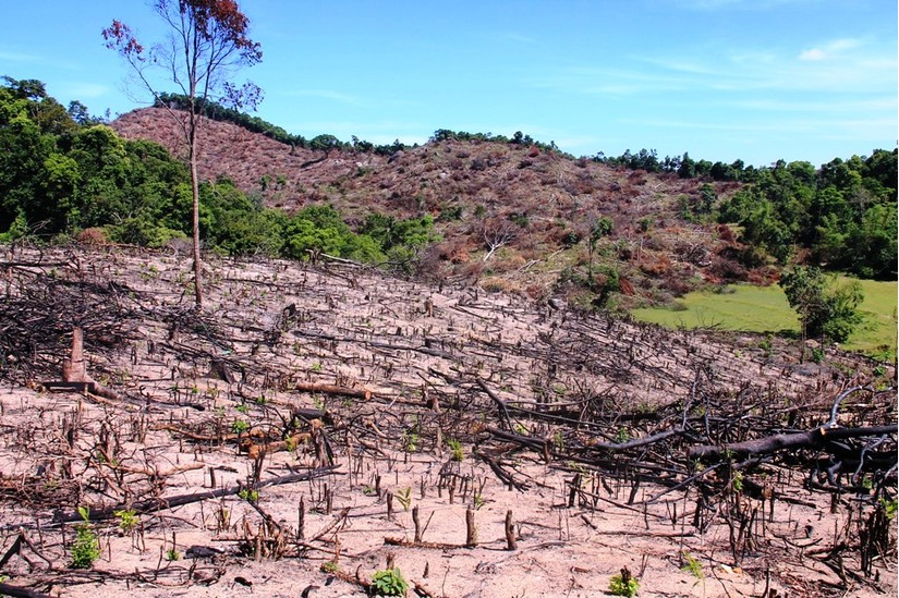 Chặt phá rừng An Lão