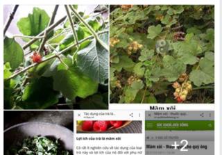 Chữa vô sinh bằng cây lá: Không có tác dụng, mất thời gian, ảnh hưởng đến sức khỏe