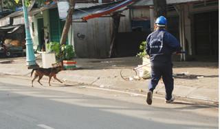Nuôi chó thả rông và không tiêm phòng dại sẽ bị xử phạt tới 1,6 triệu đồng